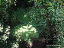 Baumfarn von oben im Sanctuary Mountain Park