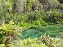 Bläuliches Wasser bei Blue Springs