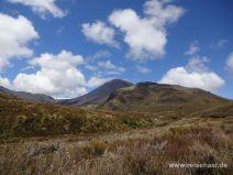 Panorama mit Ngauruhoe vom Wanderweg aus