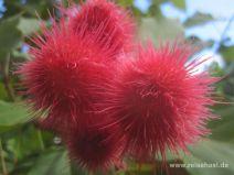 Ho'omaluhia botanischer Garten auf O'ahu