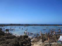 Shark's Cove