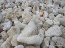 Korallenstücke