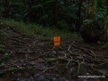 Hier startet der Maunawili Falls Trail