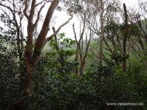Aussicht durch die Bäume