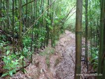Glitschiger Weg im Bambuswald