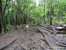 T-Kreuzung mit dem Pauoa Flats Trail