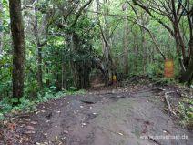 Endpunkt des Makiki Valley Trails