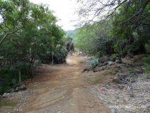 Ein Sandweg führt durch den botanischen Garten