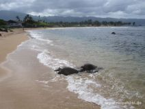 Schildkröten am Hale'iwa Ali'i Beach auf O'ahu