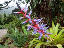 Exotische Blume am Wegesrand