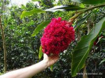 Riesengroße Blüte