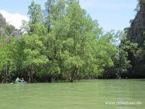Mangroven in Phang Nga