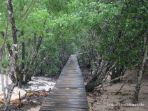 Steg durch die Mangroven auf Curieuse