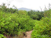 Wanderweg durch üppiges Grün auf La Curieuse