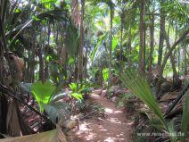 Weg im Vallée de Mai auf Praslin