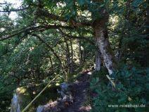 Schmaler Weg zum Kaibenfelsen