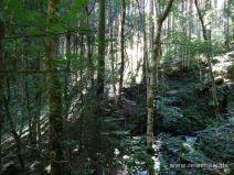 Licht- und Schattenspiel im Wald