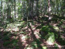 Steiler Hang im Wald