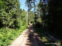 Breiter Waldweg