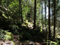 Weg über Felsen im Wald