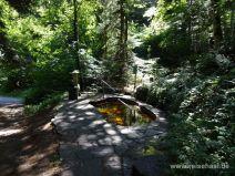 Kneippanlage im Wald am See