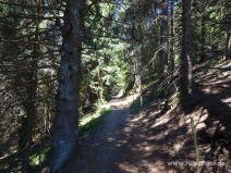 Wegabschnitt im Wald