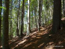 Steiler Anstieg im Wald