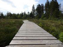 Stegweg im Moor