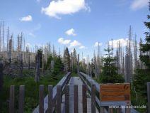 Urwaldstieg