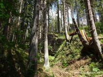 Steile Wand im Wald