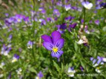 Blume auf der Wiese