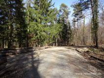 Breiter Weg im Wald
