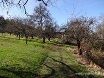 Wandern zwischen Obstbäumen