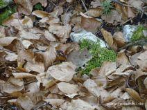 Kleine Maus im Laub