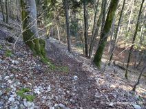 Schmaler Weg im Wald