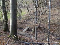 Ein Stückchen Wald