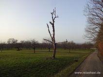 Toter Baum auf der Obstwiese