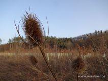 Pflanzen am Waldrand