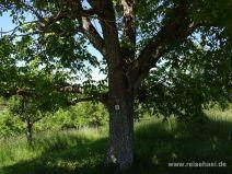 Beschilderung am Baum