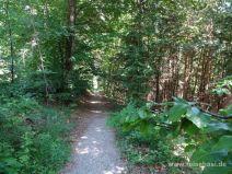 Idyllischer Pfad im Wald